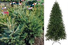 Garden retail offers Black Friday deals, including for Christmas trees with record early sales up 12.5%